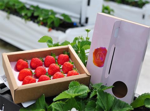 紅顏大果草莓(訂單額滿)